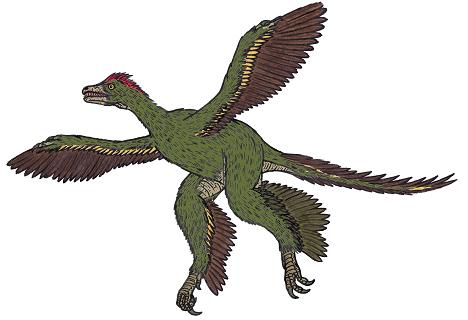 dinosaur picture anchiornis