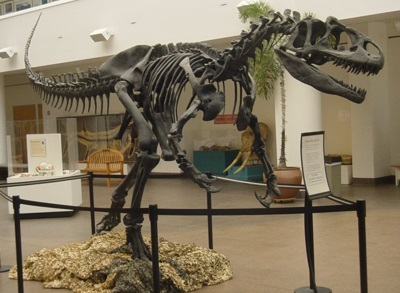 Allosaurus skeleton in the lobby of the San Diego Natural History Museum
