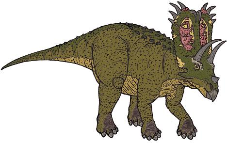 Pentaceratops picture 2